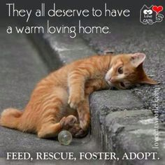 Until there are none, adopt one.