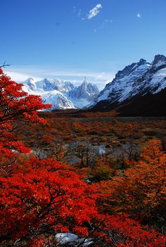 Cerro Torre and autumn leavesBy live2bnomad☆