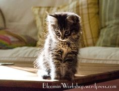 ❤ =^..^= ❤  New baby kitty by RhubarbPatch, via Flickr
