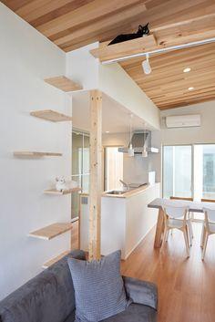 Sala Zen, Cat Climbing Wall, Level Design, Cat Wall Shelves, Cat House Diy, Diy Cat Tree, Cat Playground, Cat Enclosure, Cat Condo
