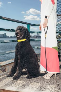 17 Of New York's Most Stylish Pups Model This Season's Hottest Trends  #refinery29  http://www.refinery29.com/mrs-sizzle-stylish-dogs-nyfw#slide-4  Jane Larkworthy, Beauty Director, W Magazine, & RemyRemy, a standard poodle, is downright regal. Clearly, he and his mom Jane live and breathe fashion. It's likely he behaves better than little miss <a...