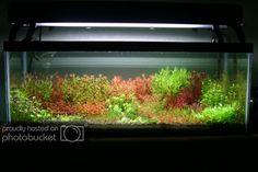 Blue/white 5-piece Sourcingmap Plastic Water Tank Aquarium Fish Decoration