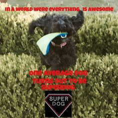 Super dog LOL this is Dolly my dog