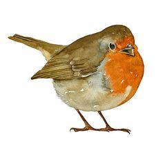 Robin Bird Art Print of my original watercolor painting limited edition.  via Etsy.