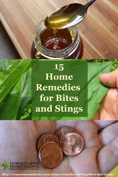"Home Remedies for Bug Bites and Stings Homesteading  - The Homestead Survival .Com     ""Please Share This Pin"""
