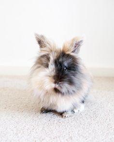fuzzy bunny //