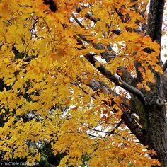 michele made me Outdoor Furniture, Outdoor Decor, Autumn, Park, Image, Home Decor, Decoration Home, Fall Season, Room Decor