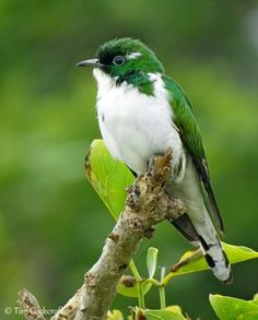 Birds  - I have never seen a green bird before, other than parrots.