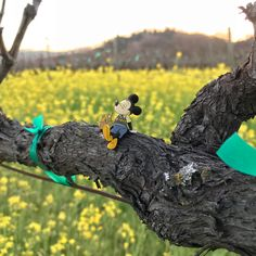 The Adventures of Tiny Mickey continue... he was recently spotted enjoying some #winecountry r and r. #tinymickey #adventures #mickeymonday #napavalley #springtime #bloom ••• #disney #illustration #drawing #art #artist #draw #instadisney #sketchbook #artwork #digitalart #illustrator #creative #artoftheday #disneylove #disneyfan #character #disneyland #mickeymouse #adventure #exploring #mickeymonday #wine #diamondadventure