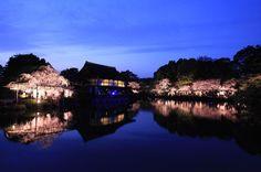 #紅しだれコンサート #平安神宮 #kyoto #japon by helvetica