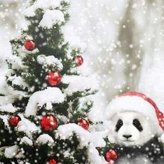 cute Panda for sale Panda Love, Cute Panda, Panda Background, Panda Art, Panda Panda, Animals And Pets, Cute Animals, Panda's Dream, Hygge Christmas