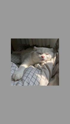 Cute Backgrounds For Phones Animals Cute Cat Wallpaper, Locked Wallpaper, Animal Wallpaper, Disney Wallpaper, Screen Wallpaper, Cute Wallpaper Backgrounds, Wallpaper Quotes, Phone Wallpapers, Wallpaper Lockscreen