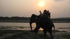 Safari på elefantryggen i Nepal #travel #safari http://travels.kilroy.no/destinasjoner/asia/nepal/safari