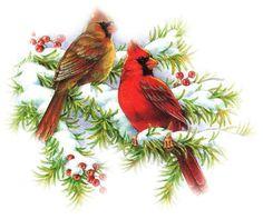 CHRISTMAS CARDINALS CLIP ART