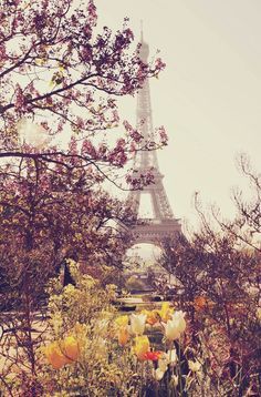 Spring time in Paris | France (by Liz Rusby)