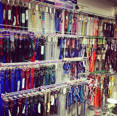 Bring your dog in to try on a new accessory! We have a wide selection of leashes and collars! Pet Christmas Presents, Your Pet, Collars, Great Gifts, Bring It On, Dog, Pets, Diy Dog, Necklaces