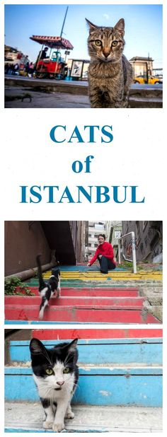 Thousands of cats rule the city of Istanbul, Turkey. It has even been called CATstantinople because of its large number of cats. Read their story and see the pictures! http://www.traveling-cats.com/2017/06/cats-from-istanbul-turkey.html (Istanbul colored stairs, Istanbul Rainbow Stairs, Istanbul Rainbow Steps, Istanbul colored steps, Cats of Istanbul, Cats of Turkey)
