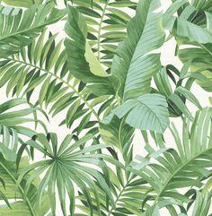 Albany Baja Green Wallpaper main image Tree Wallpaper White, Leaf Prints, Wall Prints, Tropical Leaves, Tropical Flowers, Tropical Forest, Tropical Pattern, Tropical Design, Tree Leaves