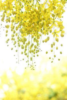 prettylittleflower:  yellow breeze by Thunderbolt_TW on Flickr.