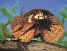 Australian Geographic art of illustration book - Australian Geographic Reptiles, Lizards, Australian Animals, View Image, Beautiful Creatures, No Frills, Moth, Insects, Tattoo Designs
