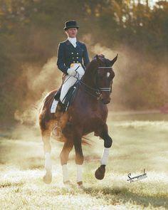 Rambo ~ Danish Warmblood Stallion