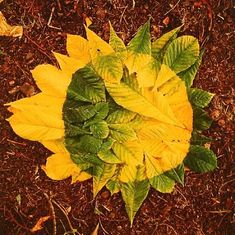 Andy Goldsworthy - Horse chestnut patch, green to...