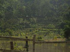 Thorangtlang Wildlife Sanctuary - in Mizoram, India.