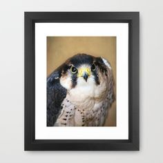 You looking at ME!!! Framed Art Print by F Photography and Digital Art - $35.00