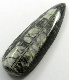 76.60CT Semi Precious NATURAL ORTHOCERAS FOSSIL 61x20mm Pear Cab Loose Gemstone #magicalcollection #Orthoceras #gemstone #jewelry