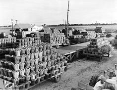 Trucks loaded with tomatoes park outside the Leamington process plant on Sept. Colchester Essex, After Story, Windsor Ontario, Star Wars, Abandoned Houses, Vaulting, Looking Back, Tomatoes, New York Skyline