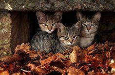 Harvest Thyme hidden kitties