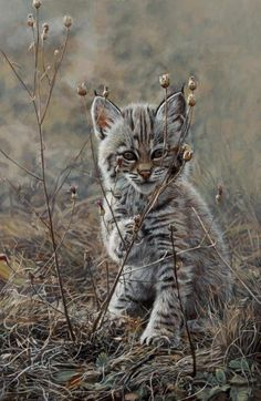 "Baby Lynx * * "" Dat 'ole man winter' dey talk about iz on hiz way. He always makes everythin' dry ands scrawny before he hits. I don't think peoples or animals like dat guy. Kittens Cutest, Cats And Kittens, Cute Cats, Animal Gato, Mundo Animal, Nature Animals, Animals And Pets, Big Cats, Crazy Cats"
