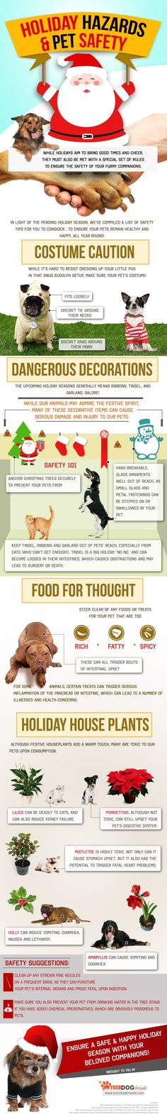 Keeping your pets safe during the holidays. Great info Animal safety