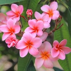 Fruit Garden, Tropical Paradise, Rose, Flowers, Plants, Pink, Orchards, Plant, Roses
