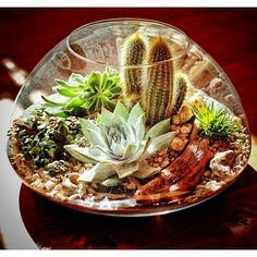 A Desert Terrarium full of cacti and succulents