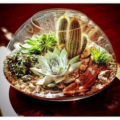 A Desert Terrarium full of cacti and succulents