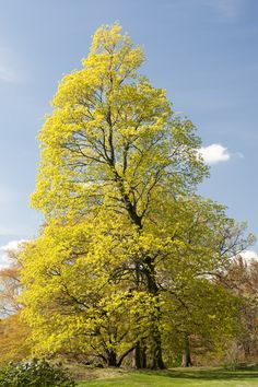 pictures of trees in the spring - Google Search