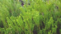 green plants -  green plants free stock photo Dimensions:3200 x 1804 Size:5.21 MB  - http://www.welovesolo.com/green-plants-3/