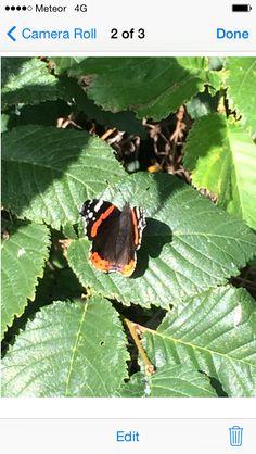 Flutter flutter Plant Leaves, Creatures, Plants, Plant, Planets