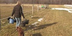 Plumbing, parenting, breeding horses: Wadsworth Township woman does it all