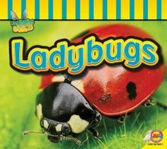 Ladybugs by Aaron Carr