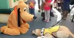 Guide dog in training meets Pluto at Disneyland