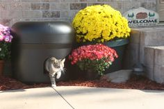 The Kitty Tube - Insulated Outdoor Cat House  http://www.squidoo.com/kitty-tube-new-and-improved-outdoor-cat-house