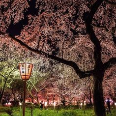 Japanese dancing of cherry blossom petal by Hinata Shin on SoundCloud