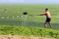 AFP The Chinese Yellow River was invaded by Algae.