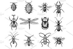 big set of insects bugs beetles and bees many species in vintage old hand drawn style engraved illustration woodcut by ArtBalitskiy on @creativemarket