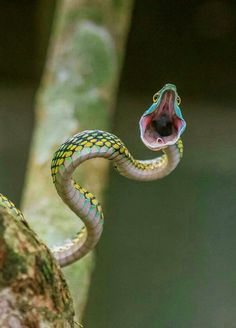 snake Cool Pictures, Creepy, Cool Stuff, Lizards, Snakes, Animals, Frogs, Nature, Beautiful