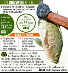 Tilapia to fetch Rs. 8,000 cr.