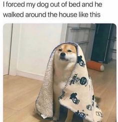 """Adorable Animal Memes That Anyone With A Soul Will Enjoy - Funny memes that """"GET IT"""" and want you to too. Get the latest funniest memes and keep up what is going on in the meme-o-sphere. Funny Dog Memes, Funny Animal Memes, Funny Animal Pictures, Cute Funny Animals, Funny Relatable Memes, Cute Baby Animals, Funny Cute, Funny Dogs, Animals And Pets"""