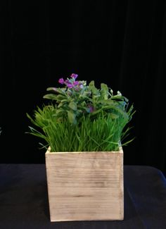 "Fox Events having some fun with our new wooden boxes for some great event decor.  One our our corporate clients had ""Grow Your Sales"" themed meeting and wanted some centerpieces for their gala.  The wooden boxes fit perfectly with their casual feel, wheat grass and flower bulbs represent growth!"